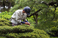 Japanese Gardener at Gonaitei Garden is within the Kyoto Imperial Palace  -  the estate dates from the Edo period when the residence of high court nobles were grouped  together within the palace walls. When the capital moved to Tokyo the court nobles' residences were demolished. Then Kyōto Gyoen became a public park open to the public, with the exception of the Imperial Palace itself.