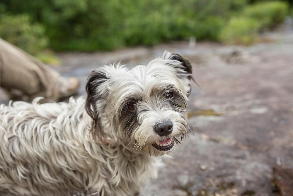 Closeup of a happy small dog on a hike