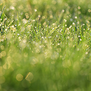 """""""Blades of Light"""" <br /> <br /> You'll love the upbeat and refreshing feeling of this beautiful nature abstract! <br /> Fresh green grass and morning dew bathed in sunlight!"""