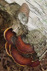 Fallen Log and Mushrooms, Upper Negro Island, Castine, Maine, US