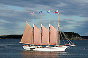 "Afternoon sunlight catches the schooner ""Margaret Todd"" sailing out of Bar Harbor, Maine."