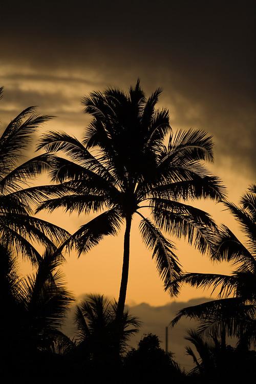 Palm trees with dusk sky
