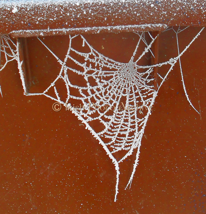 Frost spider's web , England, Winter