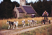 (1992) Dave Ford trains for the races with his Siberian husky team by the Santon Parish Church in Thetford, England. The team was DNA tested by Cellmark to determine their paternity. DNA Fingerprinting. MODEL RELEASED.