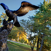 Bronze eagle sculpture at 67th & Ward Parkway in Kansas City, Missouri.