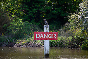 Cormorant bird on Danger sign on the River Thames in Berkshire, UK