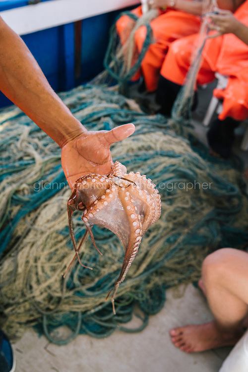 """TALAMONE, ITALY - 27 AUGUST 2019: An octopus caught by fisherman Paolo Fanciulli is seen here on the """"Sirena"""", his fishing boat, in Talamone, Italy, on August 27th 2019.<br /> <br /> In 2006, fisherman Paolo Fanciulli used government funds and the donations from his loyal excursion clients to fund a project in which they protected the local waters from trawling by dropping hundreds of concrete blocks around the seabed. But his true dream was to lay down works of art down on the sea floor off the coast of Tuscany. His underwater art dreams came true when the owner of a Carrara quarry, inspired by Mr. Fanciulli's vision, donated a hundred marble blocks to the project.<br /> Mr. Fanciulli invited sculptors to work the marble and set up kickstarter accounts, boat tours and dinners to fund the project. The acclaimed British artist Emily Young carved a ten-ton """"Weeping Guardian"""" face, which was lowered with other sculptures into the water in 2015.<br /> Since then, coral and plant life have covered the sculptures and helped bring back the fish. And Paolo the Fisherman is catching as many of them as he can."""