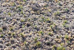 Backlit vegetation, Big Bend National Park, Texas, USA.