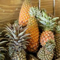 Americas, Caribbean, Antigua and Barbuda. Fresh pineapples at the local market in St John's, Antigua.