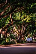 Road,street,landscape,trees,nature,natural, Coral Gables Florida,