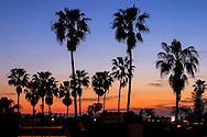 Palm Trees In Silhouette At Sunrise Near San Diego California, USA