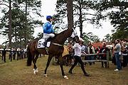 Colonial Cup - Camden, South Carolina. Jockey Paddy Young.