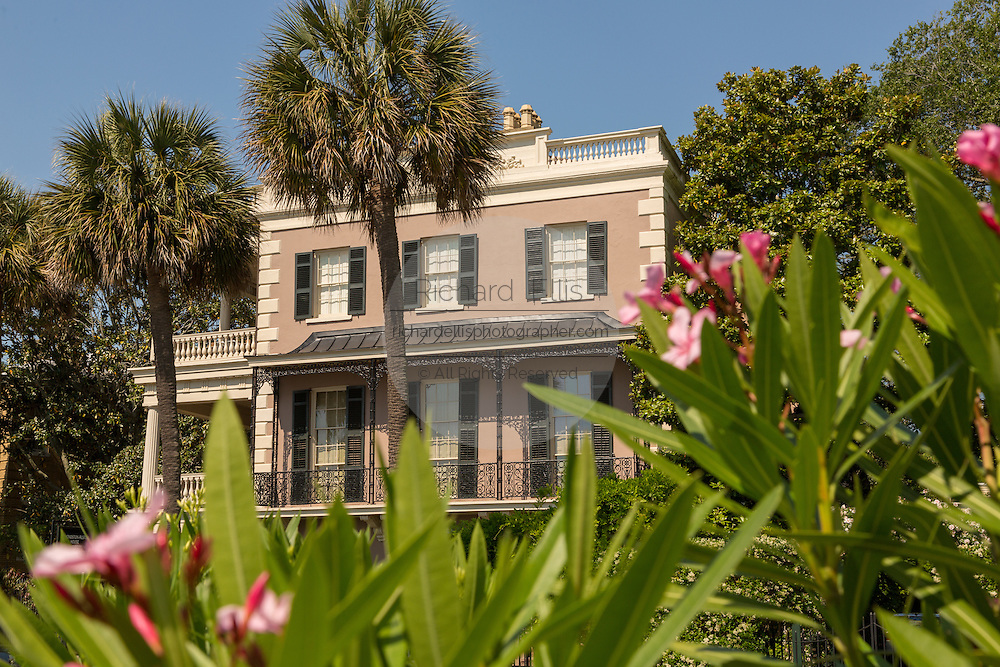 Oleander  blooms at the Edmonston-Alston House on East Battery in historic Charleston, SC.
