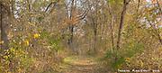 Fallen leaves carpet a nature trail in Scott County Park, southest Iowa.