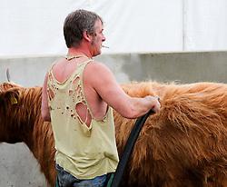 © Licensed to London News Pictures.14/07/15<br /> Harrogate, UK. <br /> <br /> A man used a hairdryer to dry his aberdeen angus cattle after washing them on the opening day of the Great Yorkshire Show.  <br /> <br /> England's premier agricultural show opened it's gates today for the start of three days of showcasing the best in British farming and the countryside.<br /> <br /> The event, which attracts over 130,000 visitors each year displays the cream of the country's livestock and offers numerous displays and events giving the chance for visitors to see many different countryside activities.<br /> <br /> Photo credit : Ian Forsyth/LNP