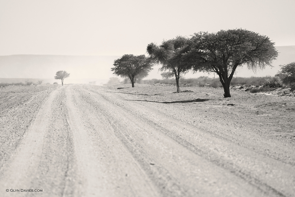 The landscape altered, subtly at first, but shrubs and small trees started to grip the pure rock and dirt of the previous day. <br /> <br /> Two minutes after this image was taken, a motionless small tree ran across the road in front of us - our first wild ostrich! Nature was quietly making an appearance the further North we drove.