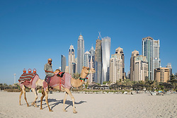 Tourist camels on beach with skyline of skyscrapers  at Marina district of Dubai United Arab Emirates