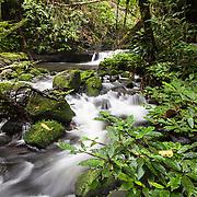 Mountain stream in the rainforest on Gunung Bondang Mountain