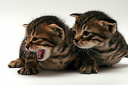 Cutout of two one week old kittens on white background