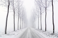 A country road surrounded by a double row of trees photographed  in the mist at dawn, just after a snowfall. Taken on a cold morning of January in the country side near to Castagnole in Piedmont, italy.