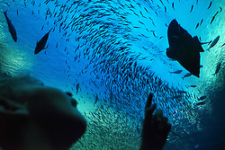 September 30, 2018 - South Africa - Two Oceans Aquarium, visitors, fish, Victoria & Alfred Waterfront, Cape Town, Western Cape, South Africa, Africa (Credit Image: © Sergi Reboredo/ZUMA Wire)