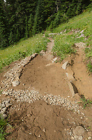 Newly repaired Hannegan Pass trail, North Cascades Washington