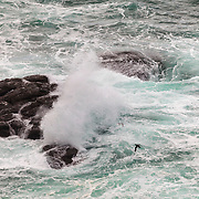 Sea with waves against the rocks and some seabirds in the scenery