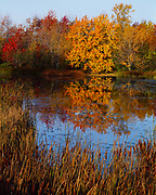 Autumn colors along Mud Creek, Lake Champlain area of northern Vermont.