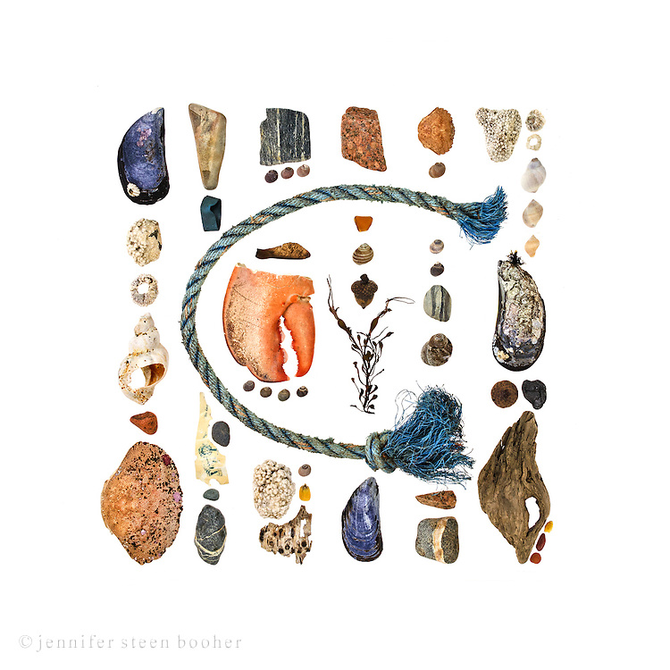 Blue Mussel (Mytilus edulis), stone encrusted with Coralline, Northern Rock Barnacle (Semibalanus balanoides), Waved Whelk (Buccinum undatum), sea brick, Rock Crab (Cancer irroratus), beach stone,  lobster claw band, polyprolylene rope (probably from a lobster trap), nursery plant tag, Common Periwinkles (Littorina littorea), maple seed (Acer sp.), lobster claw (Homarus americanus), Smooth Periwinkle (Littorina obtusata), corn kernel, Paper Birch bark (Betula papyrifera), pink granite, sea glass, acorn (Quercus sp.), Knotted Wrack (Ascophyllum nodosum), Green Crab (Carcinus maenas), styrofoam, Dogwinkle or Dog Whelk (Nucella lapillus), coal, driftwood.