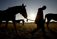The sun rises as Wateree Correctional Institution inmate and TRF trainee, Joshua Reynolds, 27, joins fellow inmates in gathering their assigned horses from the pasture. Photography by Chris Aluka Berry/ ALUKAStorytelling Photography.com)