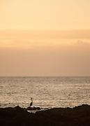Sunset, Santa Cruz Island, Galapagos Islands, Ecuador, South America