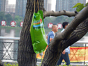 JILIN, CHINA - JUNE 19: (CHINA OUT) <br /> <br /> Nutritional Injection For Trees In Jilin<br /> <br /> A tree receives nutritional injection on June 19, 2013 in Jilin, Jilin Province of China. According to the local Municipal Bureau of Parks and Forestry, they planted to inject 6,000 trees with nutrient fluid around the city. <br /> ©Exclusivepix