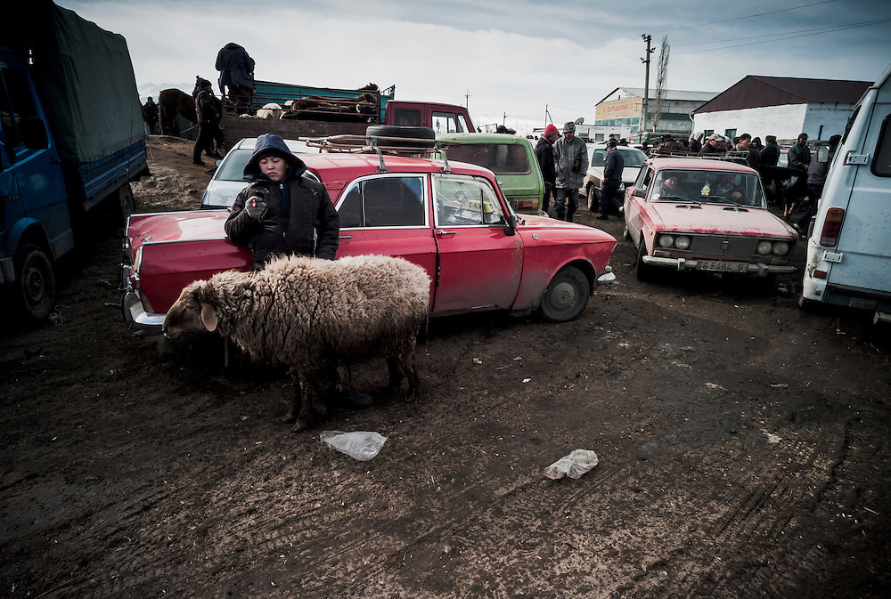 Waiting with a sheep, a local texts on his phone amidst the seeming chaos of the animal market.