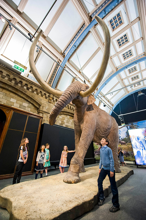Mammoths: Ice Age Giants at the Natural History Museum (opens 23 May 2014)<br /> It includes huge fossils and life-size models of mammoths and their relatives tower above you and meet Lyuba, the world's most complete mammoth, as she takes centre stage in the exhibition for her first appearance in western Europe. She is the star of the show, a baby woolly mammoth discovered in Russia's Yamal Peninsula of Siberia in May 2007. She died around 42,000 years ago at just one month old. Her body was buried in wet clay and mud which then froze, preserving it until she was found by reindeer herder Yuri Khudi and his sons, as they were searching for wood along the frozen Yuribei River thousands of years later. The exhibition also includes some of the best-known species, from the infamous woolly mammoth and the spiral-tusked Columbian mammoth to their island-dwelling relative the dwarf mammoth. South Kensington, London.
