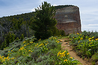 Wildflowers covered the side of Heart Mountain near the base of the large cliff.