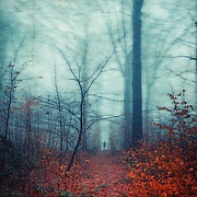 Forest path in late autumn.<br /> Texturized photograph.<br /> Prints: http://society6.com/DirkWuestenhagenImagery/equilibrium-s6b_Print