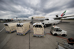 Loading of the horses into the airplane<br /> Departure of the horses to the Rio Olympics from Liege Airport - Liege 2016<br /> © Hippo Foto - Dirk Caremans<br /> 30/07/16