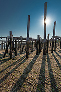 Pilings and their shadows on the waterfront in Provincetown
