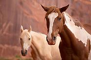 Wild Horses - Navajoland