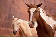 Horses in Monument Valley, AZ