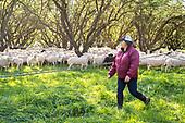 Farms: Bio-Diverse