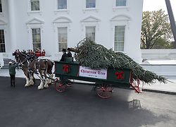 November 19, 2018 - Washington, District of Columbia, U.S. - The 2018 White House Christmas Tree arrives as in previous years by horse and carriage on the North Portico prior to United States President Donald J. Trump and First lady Melania Trump coming out of the residence to accept it on the North Driveway of the White House in Washington, DC on Monday, November 19, 2018. The tree will be displayed in the Blue Room of the White House. .Credit: Ron Sachs / CNP.(RESTRICTION: NO New York or New Jersey Newspapers or newspapers within a 75 mile radius of New York City) (Credit Image: © Ron Sachs/CNP via ZUMA Wire)