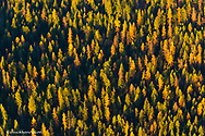 Aerial view of mixed pine forest near Kalispell, Montana, USA