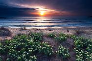 Coast of Silistar at springtime