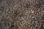 Young girl s face nearly covered by pebbles on a shingle beach