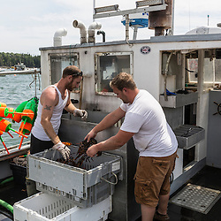 """Ryan Schultz (left) helps captain Richard Curtis unload lobsters from his boat, """"Margaritaville"""" at the Friendship Lobster Co-op in Friendship, Maine."""