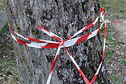cordon off tape wrapped around a tree
