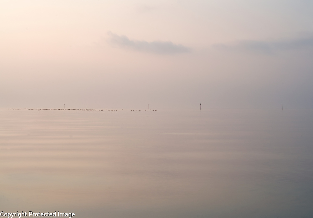 A flock of sea birds is resting on the water in the early morning mist lit by the rising sun, Mokbaai, Texel, the Netherlands.
