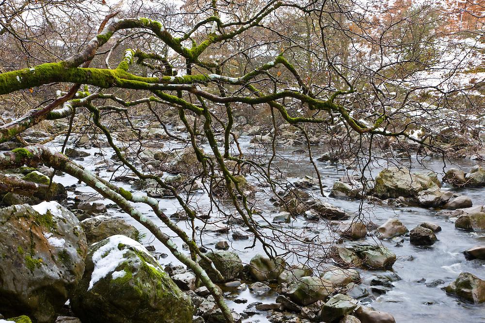 River Elan, (Quercus robur) The Elan Valley, Rhayader, Mid-Wales, UK          RIO ELAN, VALLE DE ELAN, RHAYADER, GALES MEDIO, REINO UNIDO