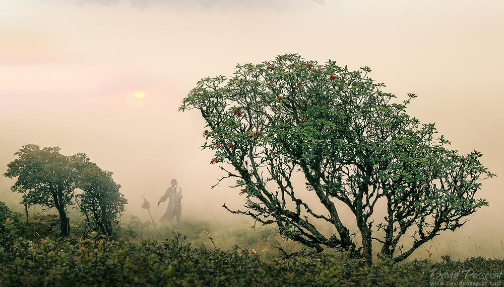 Woman walking in a misty landscape.